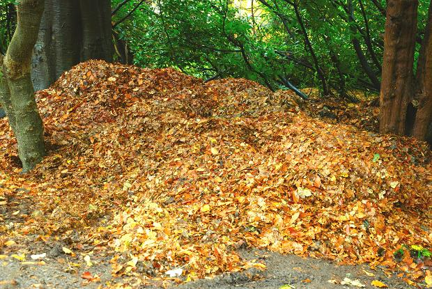 Autumn_at_Dunmurry_(3)_-_geograph.org.uk_-_1043840.jpg